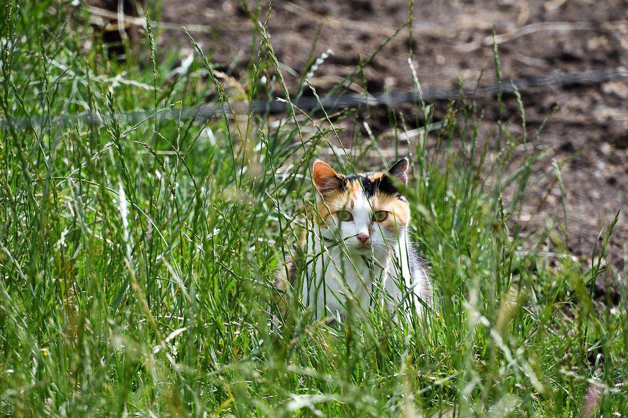 testimonials cat